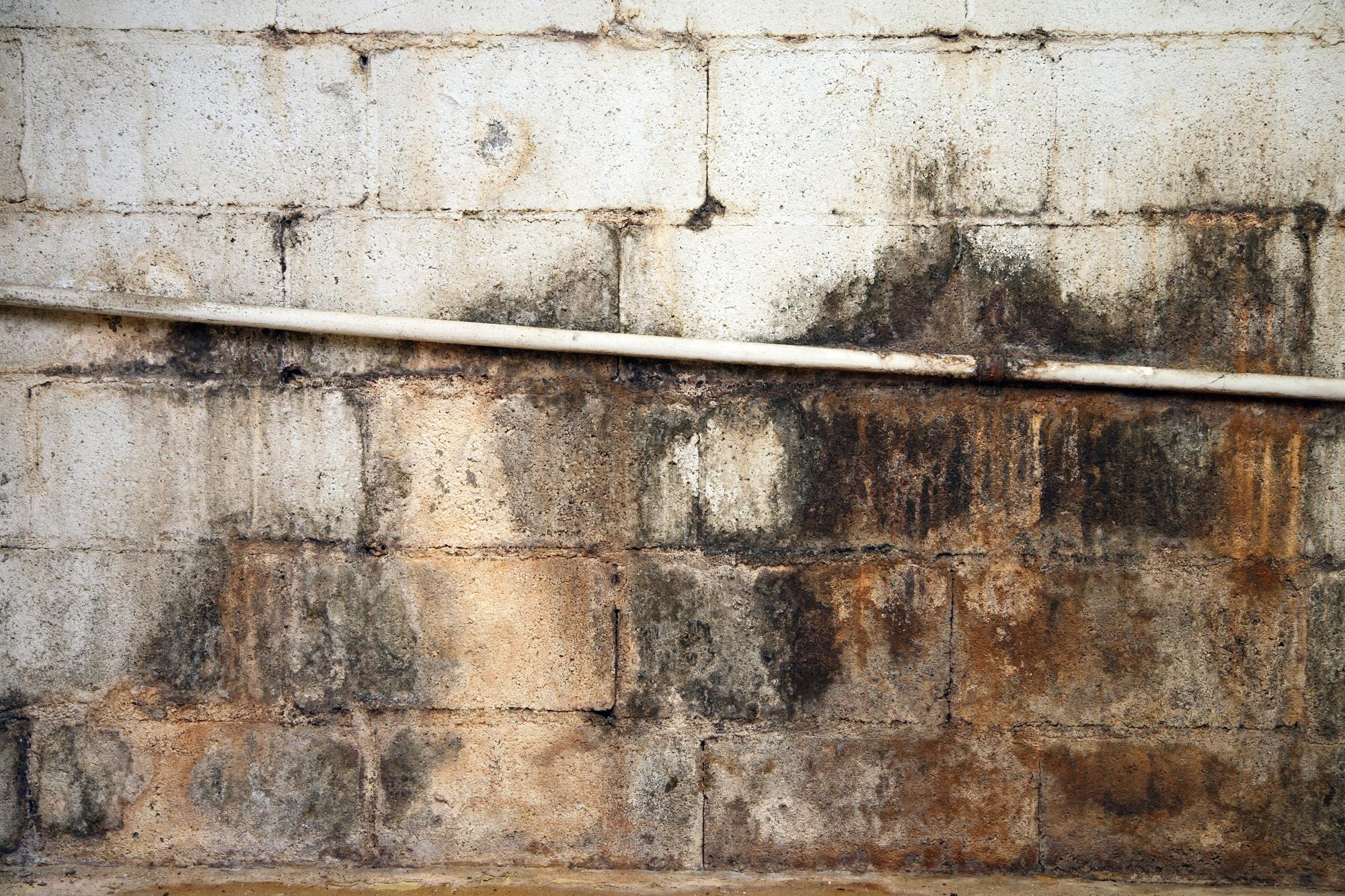 crawl space mold remediation